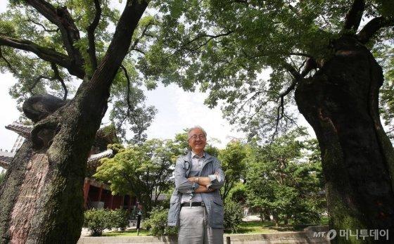 돈화문으로 들어가면 만나는 오른편 회화나무 4그루(천연기념물 제472호). 400~600년 정도로 추정된다. /사진=김창현 기자