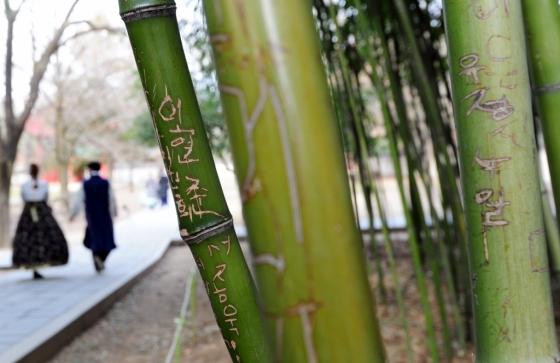 지난 1월11일 오후 전북 전주시 한옥마을 안에 위치한 경기전 대나무 숲이 관광객들의 낙서로 훼손되어 있다. /사진=뉴시스