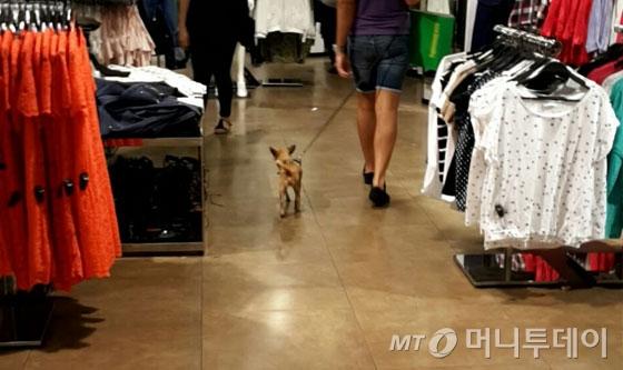 미국의 한 옷가게에서 강아지가 보호자와 걷고 있다.