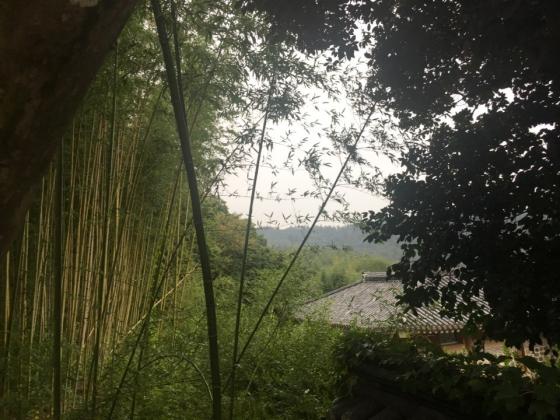 녹우당을 둘러싼 대나무숲. /사진=이경은 기자