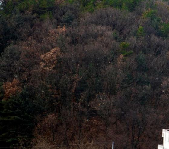 나무 사이 내린 하얀 눈을 볼 수 있다./사진=양주시 공식 트위터 캡처