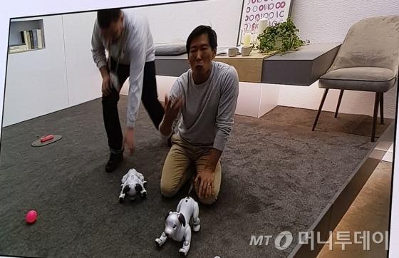 소니의 인공지능 반려봇 '아이보'가 지난 9일 미국 라스베이거스에서 열린 국제 전자전시회(CES 2018)에서 시연 도중 동작을 멈췄다. 행사 보조자가 시스템이 다운된 아이보를 치우기 위해 집어들려고 하고 있다./사진=오동희 기자