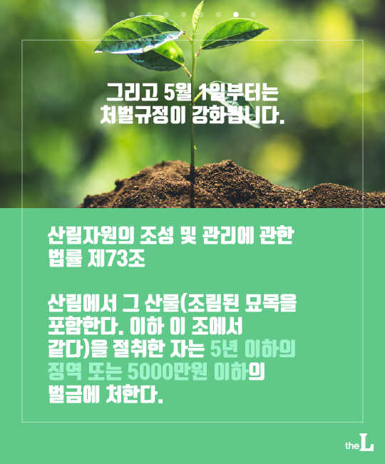 [카드뉴스] 봄맞이 산나물, 캐다간 쇠고랑