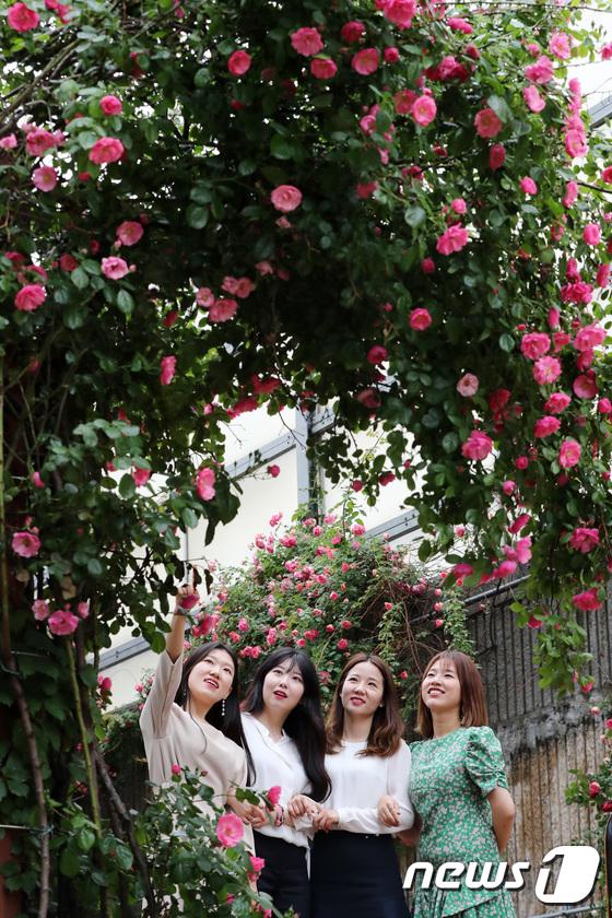 [사진]'장미꽃 아래에서'