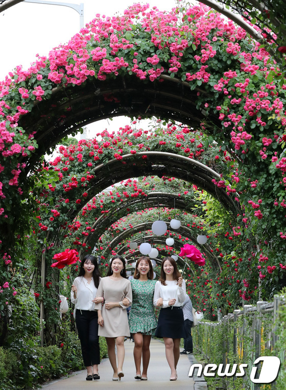 [사진]터널따라 장미산책