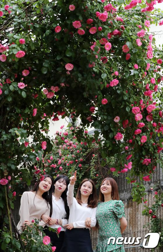 [사진]초여름 시작 알리는 붉은 장미들