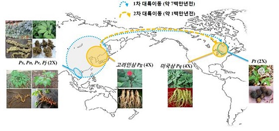 인삼 속 식물들의 분포 및 두번의 대륙이동. 실선은 인삼 속 식물들의 현재의 분포지역, 점선은 과거에 분포추정지역과 대륙이동 경로를 나타낸다/사진=서울대