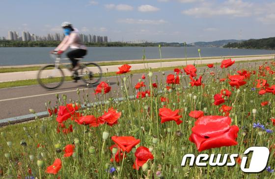 [사진]'양귀비 물결따라 자전거 타볼까'