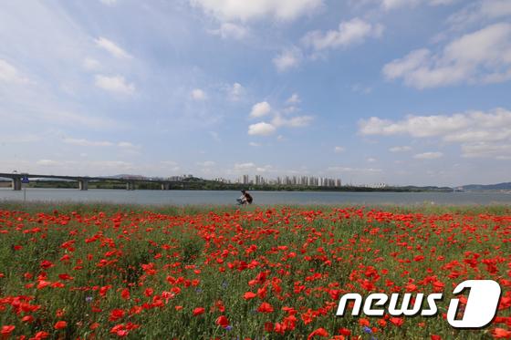 [사진]파란 하늘 아래 빨간 양귀비