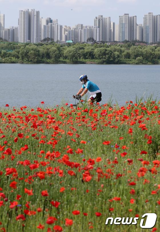 [사진]'양귀비 물결 보며 자전거 즐겨요'
