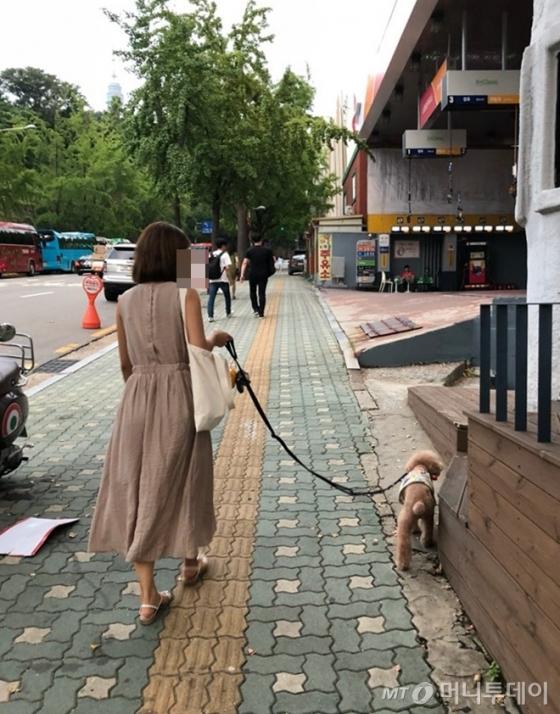 지난 6일 서울 용산구에서 반려견을 산책시키는 시민의 모습. /사진= 유승목 기자