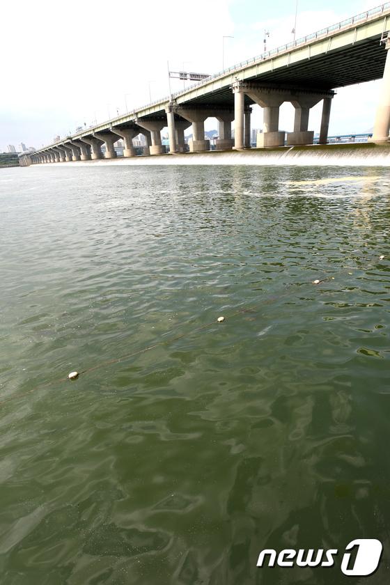 [사진]한강에 뜬 녹조