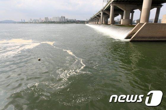 [사진]지속된 폭염에 한강은 녹조로 몸살