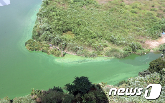 [사진]녹조 낀 금강