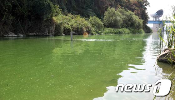 [사진]폭염에 확산되는 녹조