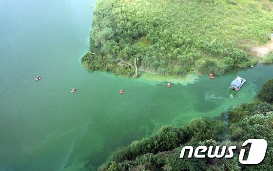 [사진]녹조에 신음하는 금강