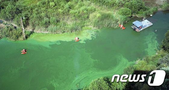 [사진]녹조와 가뭄으로 신음하는 금강