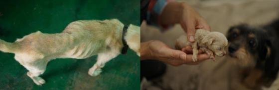 제주 서귀포시에서 방치돼 있던 개 33마리가 지난달 7일 동물보호단체 의해 구조될 당시의 모습. /사진제공= 제주동물친구들