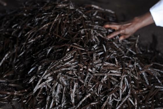 농부들이 바닐라를 수확 후 정돈하고 있다./AFPBBNews=뉴스1