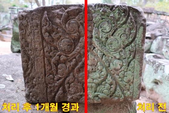 캄보디아 사원 벽면에 '스톤키퍼'를 처리한 후 생물체 고사와 생장 제어 모습 비교. /사진=문화재청