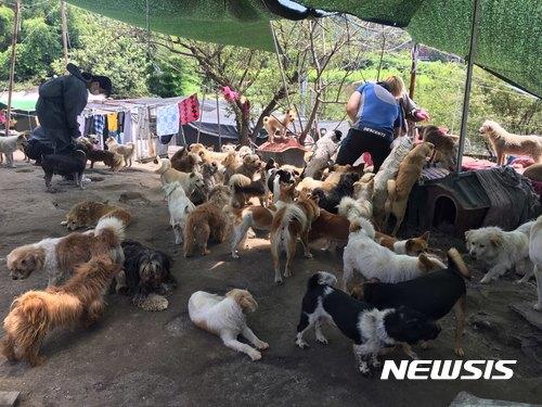 지난 8월31일 대구 동구 한 유기견보호소에서 봉사자들이 개들을 보살피고 있다. /사진=뉴시스