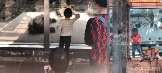 지난달 30일 찾은 대전의 한 동물원. 어린이 관람객들이 유리창을 발로 차거나 두드려 동물들을 놀래키고 있다. /사진= 유승목 기자