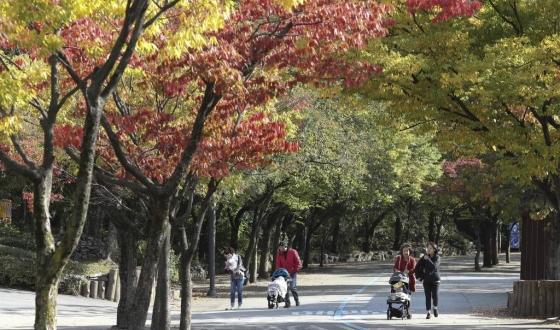 쌀쌀한 가을 날씨를 보이고 있는  11일 오후 경기도 과천 서울대공원 동물원을 찾은 시민들이 산책을 하고 있다. /사진=뉴시스