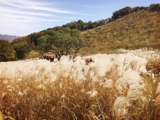 13~28일 경기 포천에서 열리는 '산정호수 명성산 억새꽃축제 2018'에선 억새밭에서 펼쳐지는 은빛 물결을 눈으로 확인할 수 있다. /사진 제공=한국관광공사