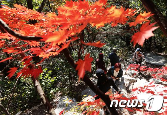 [사진]울긋불긋 가을단풍