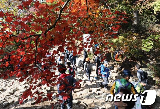 [사진]'가을단풍 벗 삼아'