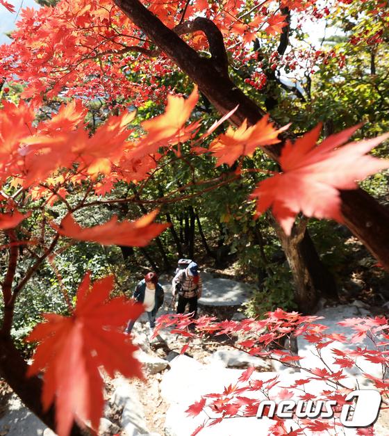 [사진]깊어가는 가을 속으로