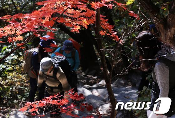 [사진]단풍 즐기는 산행객들