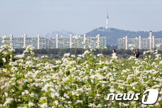 [사진]메밀꽃 향기에 취해