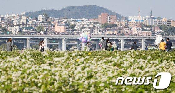 [사진]가을 산책