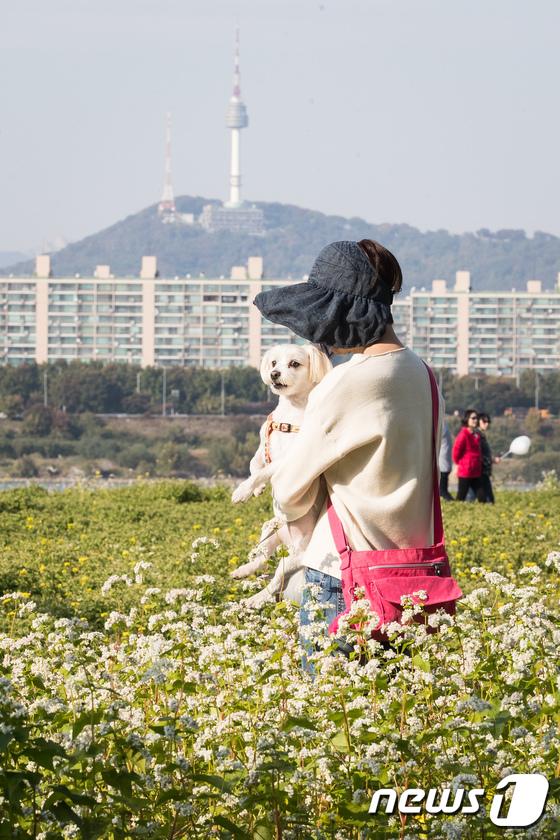 [사진]강아지와 함께 느끼는 가을