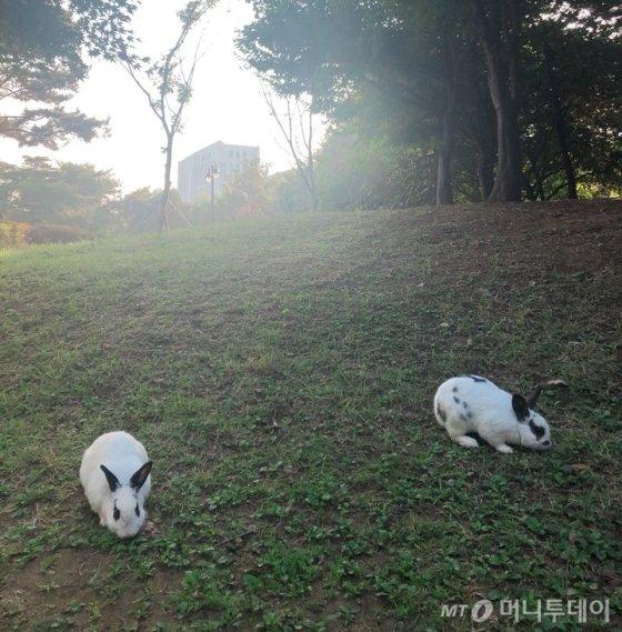 지난 17일 찾은 서울 서초구 몽마르뜨 공원에서 만난 토끼. /사진= 유승목 기자