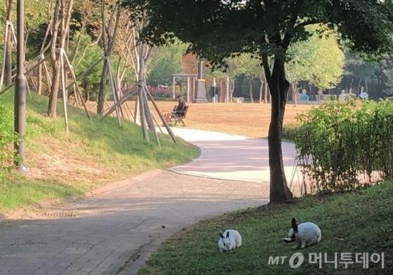 지난 17일 찾은 서울 서초구 몽마르뜨 공원에서 한가롭게 시간을 보내고 있는 토끼와 사람의 모습. /사진= 유승목 기자