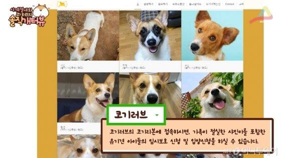 '코기러브' 내 웰시코기 유기견 입양 프로젝트, '코기리본'.