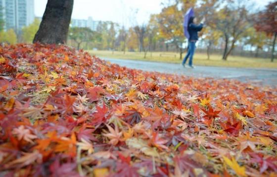서해상에서 북동진 하는 저기압의 영향으로 비가 내리는 8일 오후 대구 북구 구암동 함지근린공원에서 우산을 쓴 시민이 공원길을 걷고 있다. /사진=뉴시스