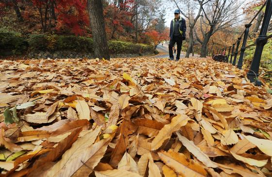 9일 오후 경기도 수원시 팔달산 산책로에서 시민들이 떨어진 낙엽을 밟으며 산책을 하고 있다. /사진=뉴스1