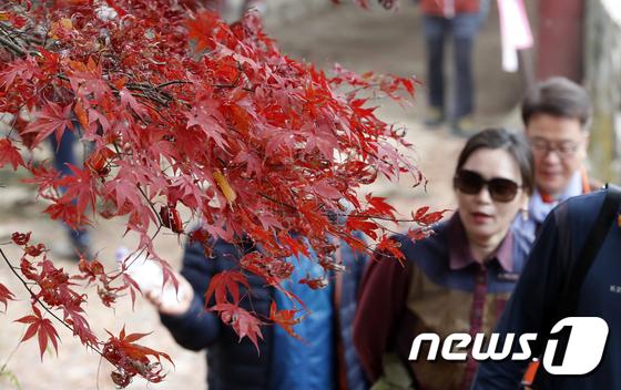 [사진]막바지 가을 정취