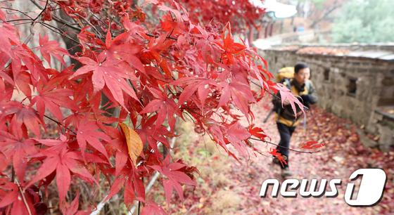 [사진]'막바지 가을을 즐깁니다'