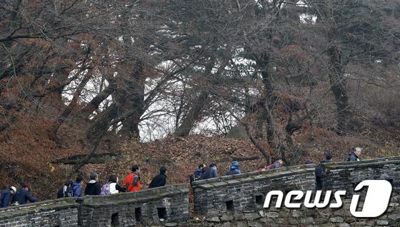 [사진]나뭇잎 떨어진 나무 사이로