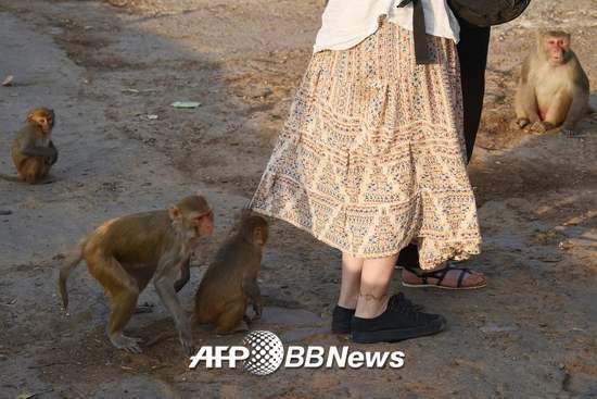 2016년 12월16일 인도 라자스탄주의 자이푸르의 한 사원에서 관광객들 주변을 원숭이들이 맴돌고 있다. /AFPBBNews=뉴스1