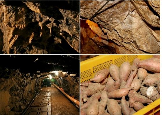 식품 이커머스 전문업체 식탁이있는삶의 '동굴 속 고구마'. / 사진제공=식탁이있는삶