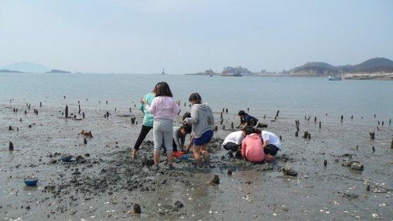 전북 군산 신시도마을 갯벌 체험 모습/사진제공=신시도어촌체험마을