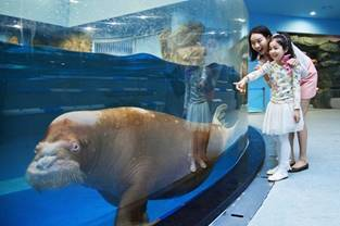 아쿠아플라넷 일산 바다코끼리와 가족/사진=한화호텔앤리조트