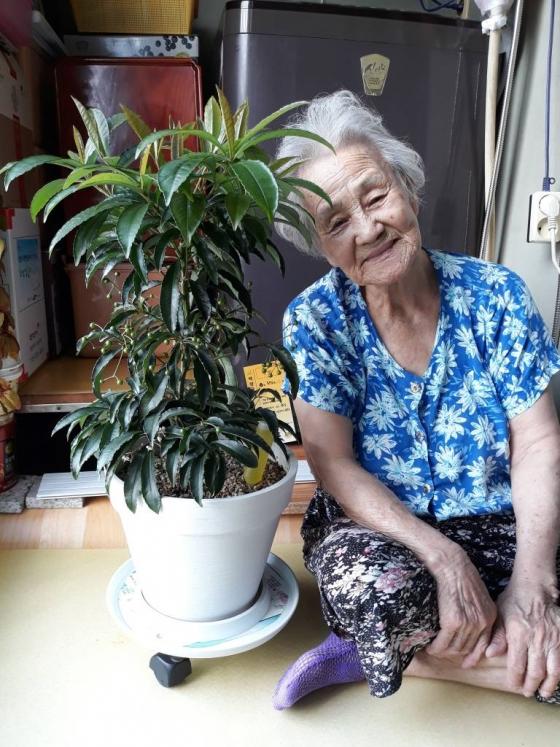 서울시는 홀몸 어르신들을 대상으로 외로움 해소를 위해 반려식물 보급에 나섰다. 한 어르신이 반려식물을 정성껏 키우고 있다. 사진제공=서울시
