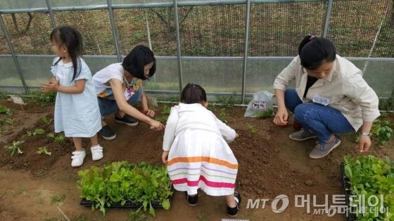 지난 5~7월 세종에서 진행된 부모와 자녀가 함께하는 '가족농장 치유농업 프로그램'에서 참가자들이 텃밭 작업을 하고 있다./사진=국립원예특작과학원