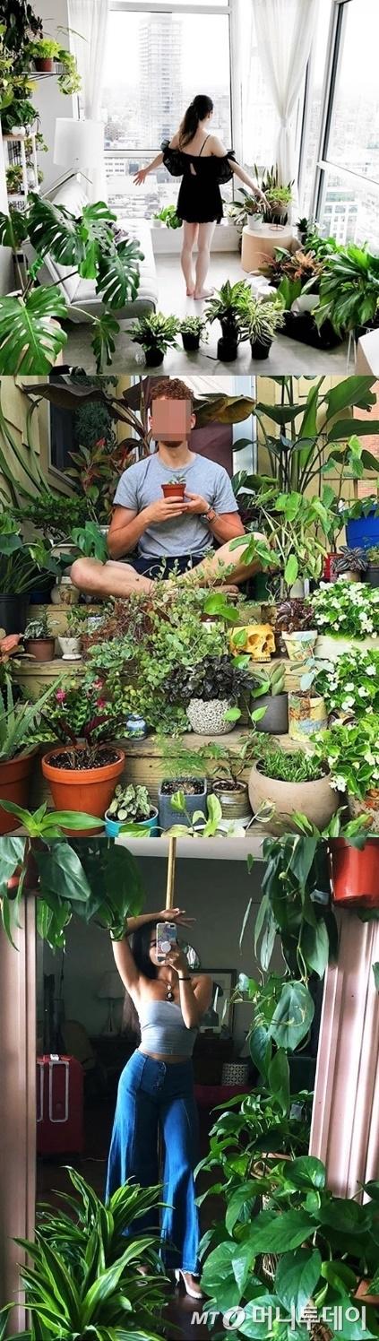 반려식물들로 가득찬 실내 공간/사진=Instagram